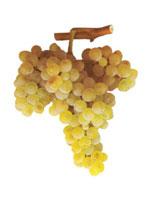 Bical Grapes
