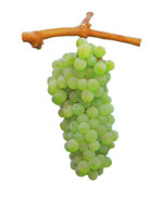 Antao Vaz Grapes