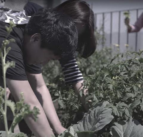 toun28 self grown Kale