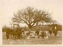 Harvestnormandy_1920s30s
