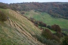 Scarp_slope_at_haresfield