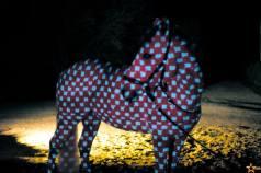 stanislas-zanko-cheval4