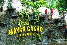 Mayan Cacao Co1
