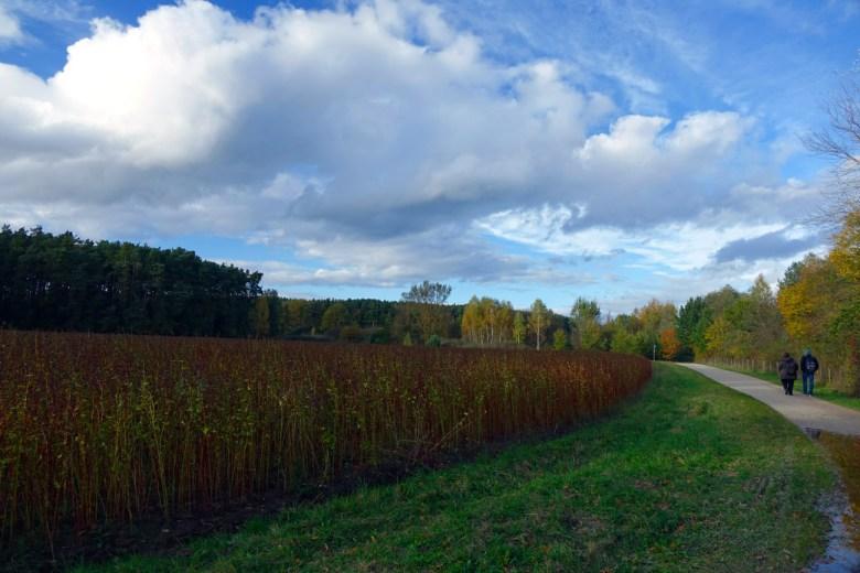 Im Herbst zeichnen die Wolken bizarre Bilder an den Himmel über dem Kleinen Rothsee im Fränkischen Seenland