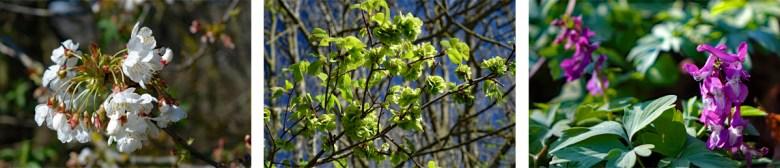Wanderweg Nr. 8 Eibachgrund im Frühling