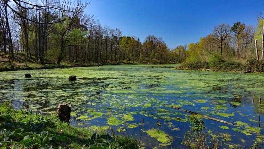 See im Naturschutzgebiet Hainberg in Oberasbach im Landkreis Fürth