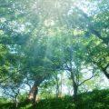 【薬膳の基礎知識その6】整体観(人と自然の関係と六気・六淫)