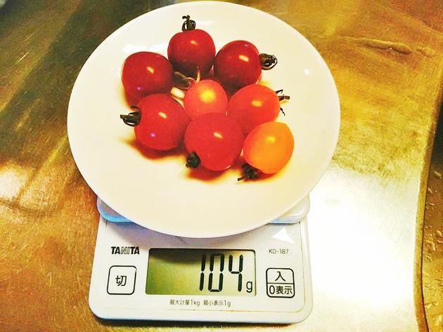 ミニトマト100