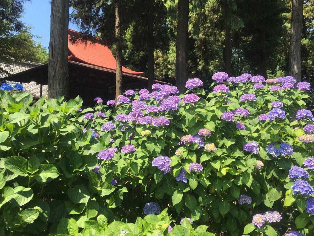 夏近づく水無月 まだまだあるぞ!花菖蒲&紫陽花スポット@大宮
