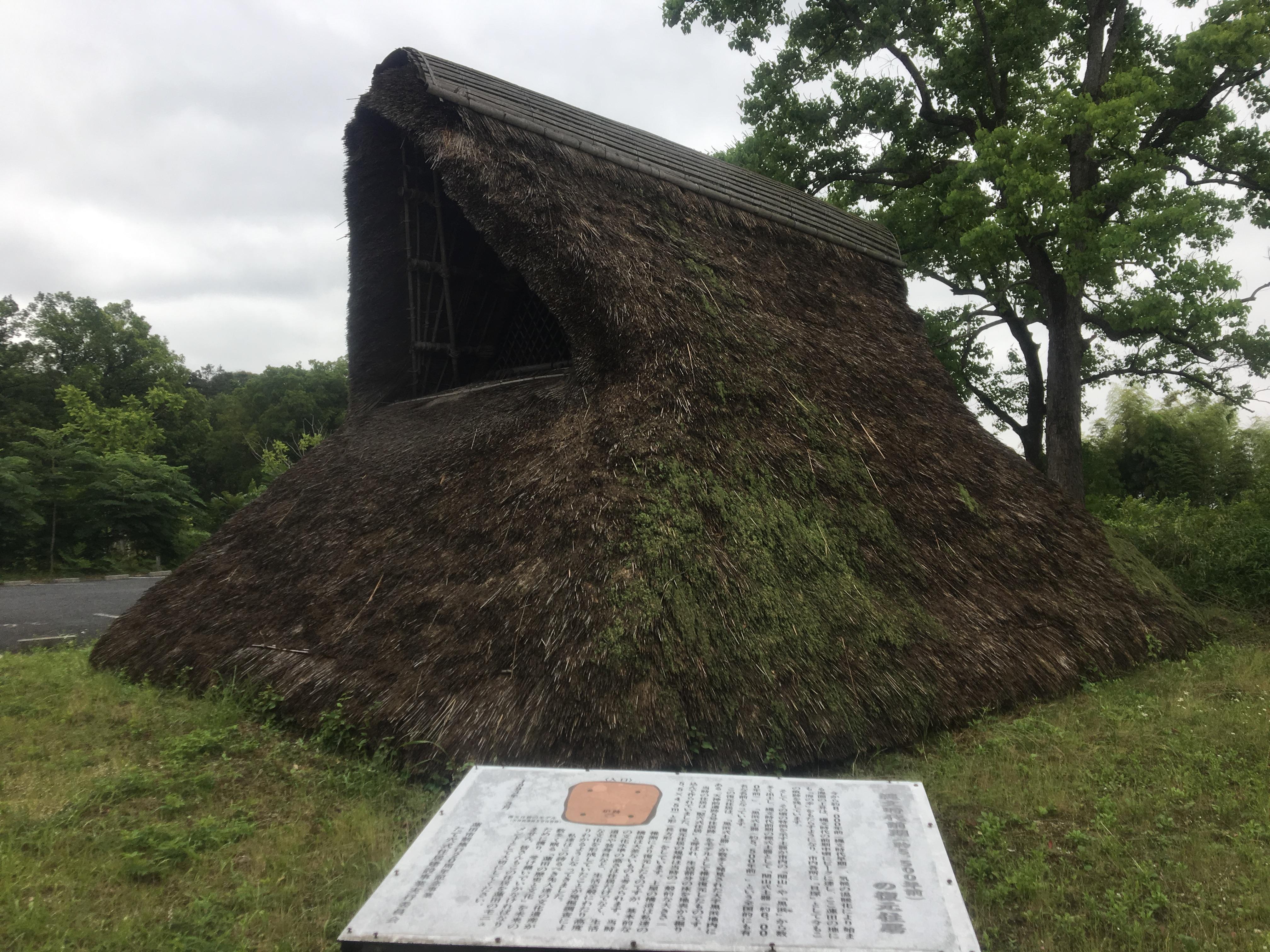 お宝ザクザク!?蓮田市その3 黒浜貝塚で古代人の貝殻発見!