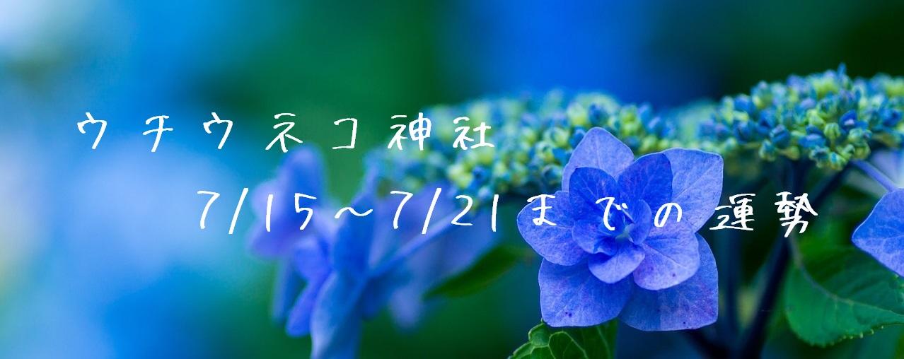 【ウチウネコ神社】7/15~7/21までの運勢