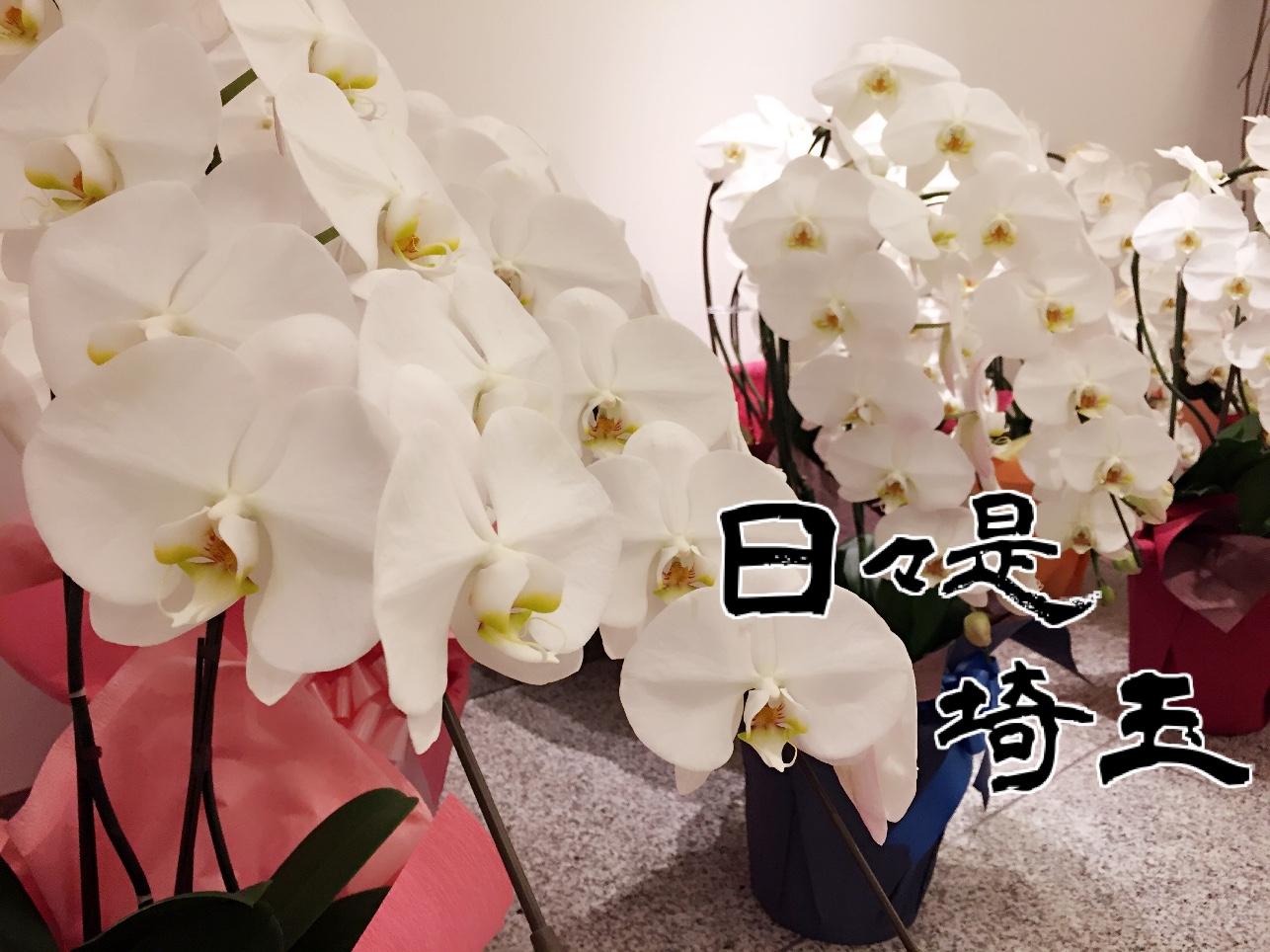 【日々是埼玉 2020/5/9】胡蝶蘭で幸せを 黒臼洋蘭園らんやでキャンペーン中