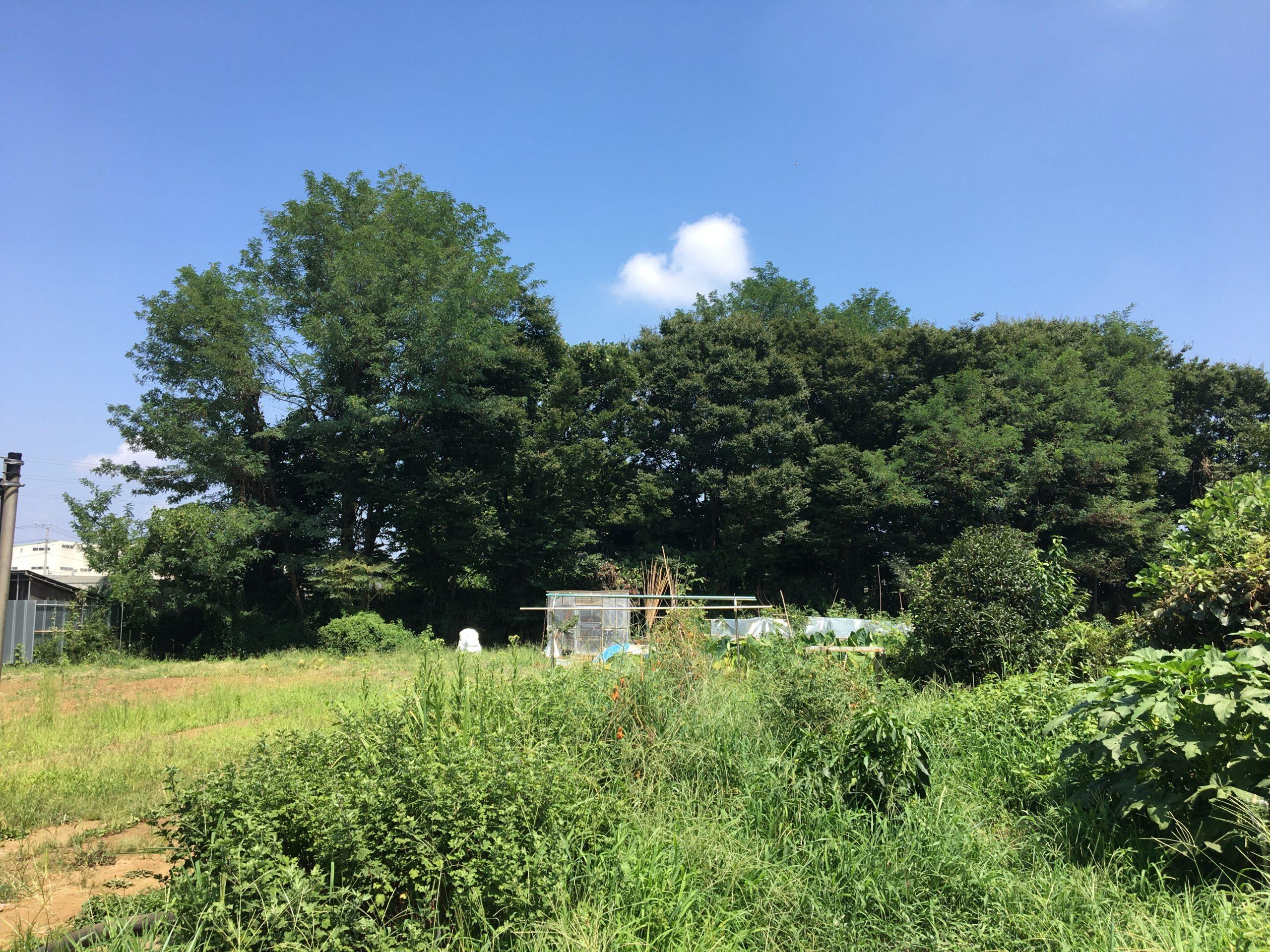 クールな華咲く東所沢 その2 たぶん、あのへんないきものも?所沢市松郷を歩く