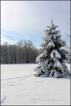 Winter 2013/14 was one of NJ's snowiest