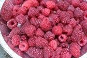 Raspberry harvest from my garden