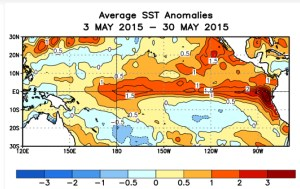 Chart showing anomalies in sea surface temperatures generated by the growing El Nino during the month of May 2015
