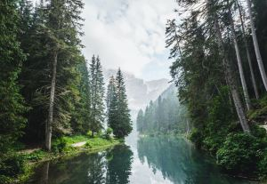 body of water surrounded by pine trees during daytime