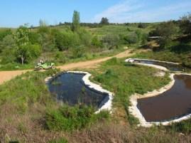 Wasserplanzenanzucht
