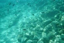 Viele kleine Fische.