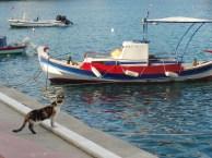 Katze im Hafen von Sitia.