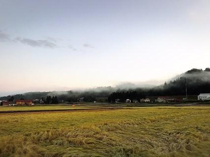 稲刈りシーズン