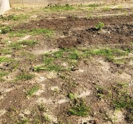 草取り前の畑