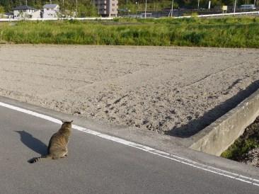 道路の真ん中で寝る子だった。飼いはじめて2年くらいは外飼いしていた。