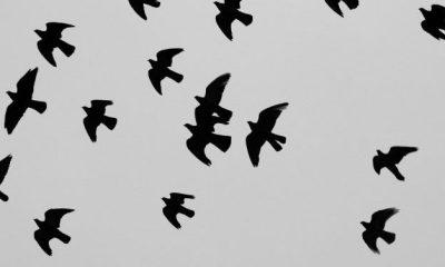 El pájaro Cu