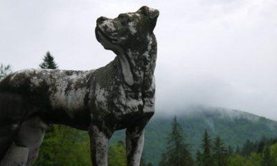 Simbología del perro