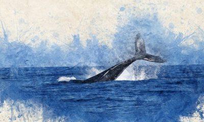 Simbolismo de la ballena