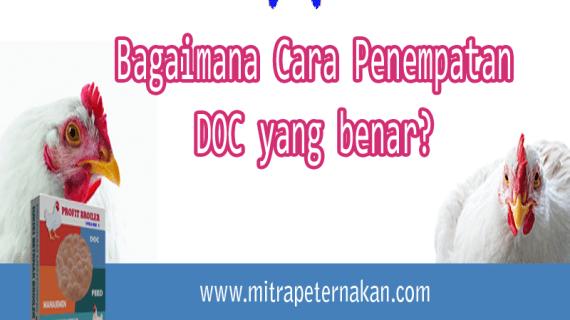 Apa yang harus dilakukan saat Persiapan Kedatangan DOC?