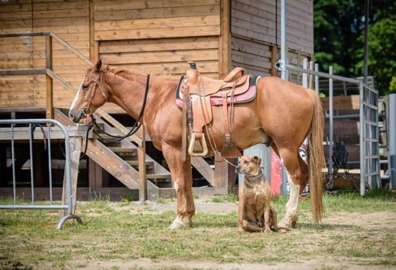 EALC – setkání majitelů psů Catahoula