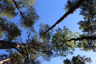 ...zu den hoch aufragenden Bäumen