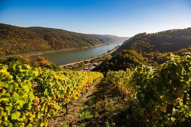 Weinberg bei Oberwesel. Foto: Henry Tornow / Romantischer Rhein Tourismus