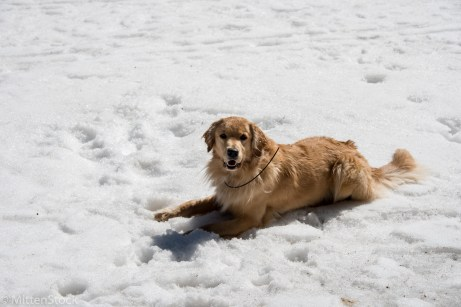 Laying in the snow every chance he could