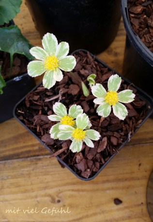 19. Blumen