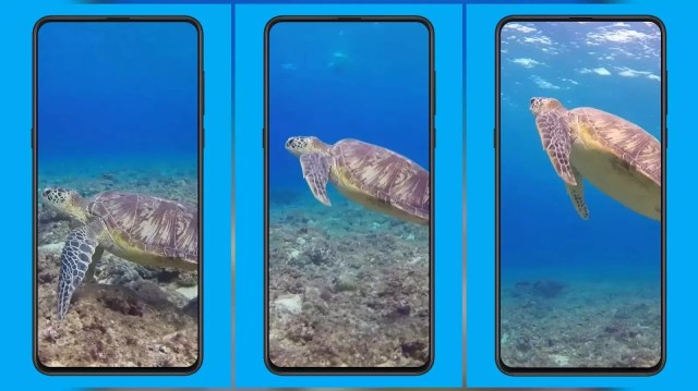 Green turtle MIUI Video Wallpaper