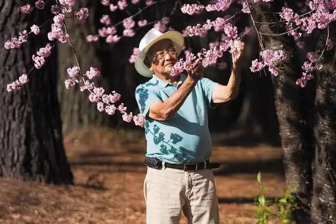 Aos 91 anos, japonês cultiva cerejeiras no Morro do Chapéu, em Nova Lima