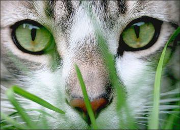gato-001