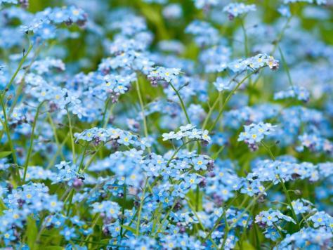 hq-wallpapers_ru_flowers_7772_1024x768