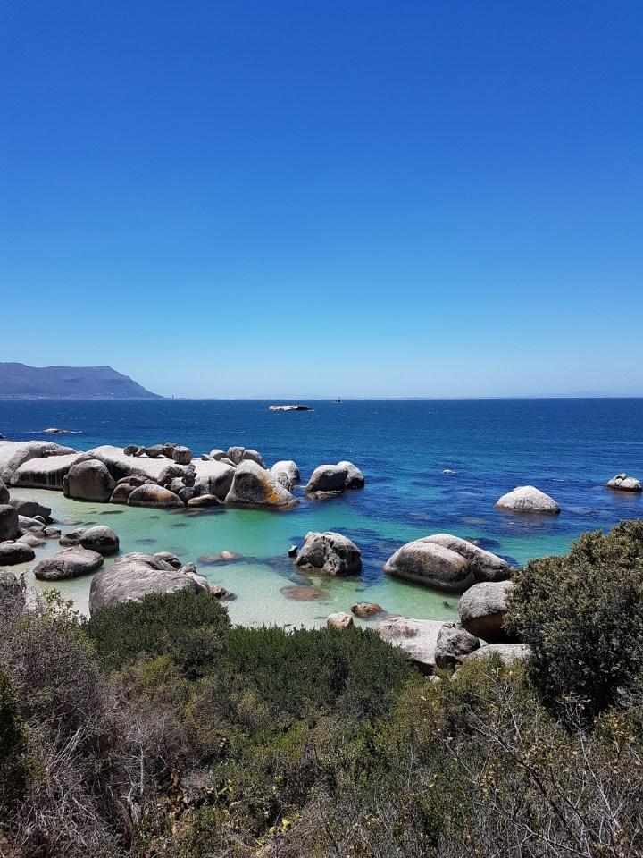 O que fazer na Cidade do Cabo na África do Sul Boulder's Beach praia dos pinguins (3)