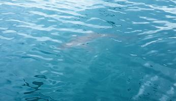 Mergulho com tubarões na África no Sul (1)