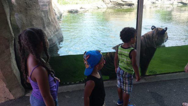 Visit Virginia Beach with Kids - 5 Things to See by Mixed Family Life for Kid World Citizen _ VA Zoo