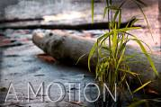 A.Motion Photo https://www.facebook.com/A.MOTIONphoto