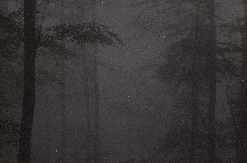 DxrkCloudBeats – Forest (Instrumental Mixtape)