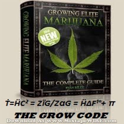 The-Grow-Code-Seeds-To-Success