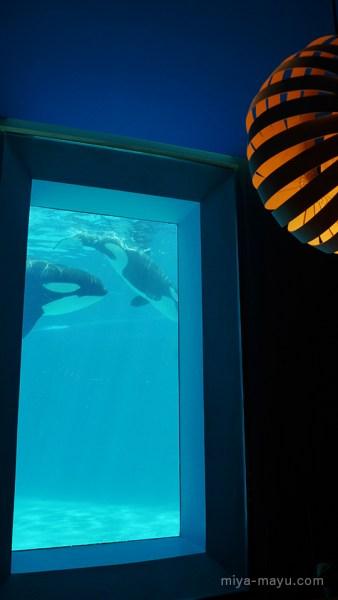 レストラン「オーシャン」内からシャチの水槽を望む 2014.8.4 千葉県鴨川市・鴨川シーワールド