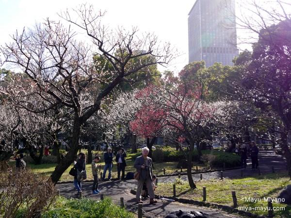 紅梅・白梅 2016.2.14 東京都港区・芝公園