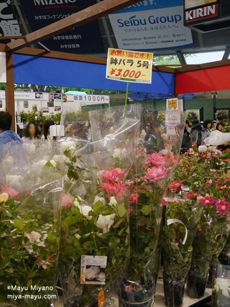 開花株。右に並ぶポット苗に比べると、大きな鉢に植わっている