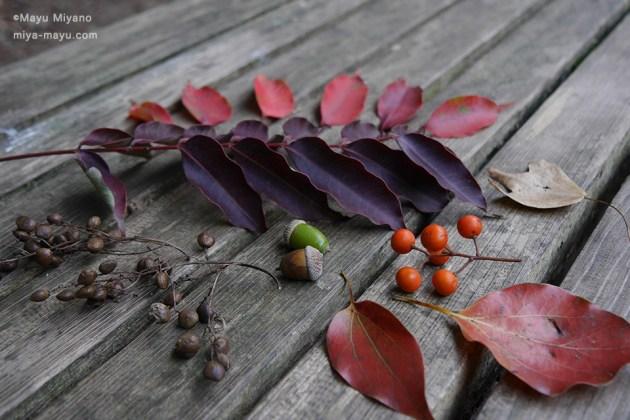 秋の落としもの